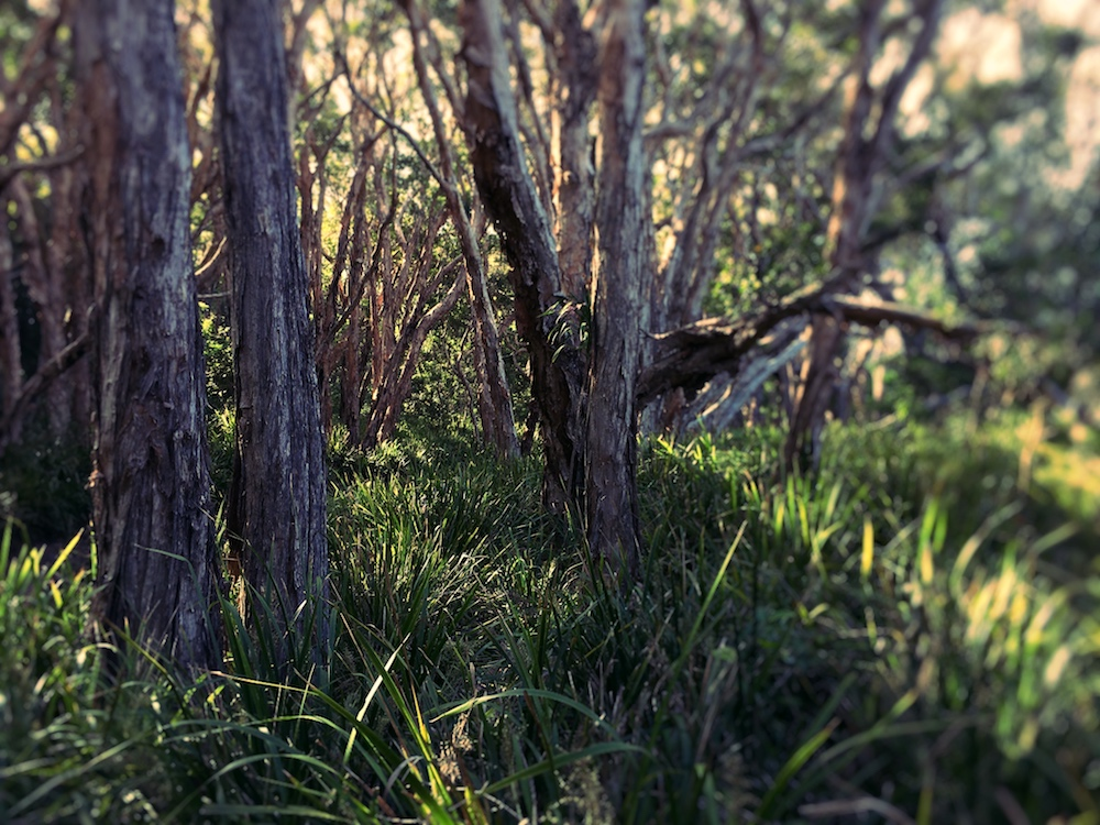 alone-in-the-paperbark-wetlands