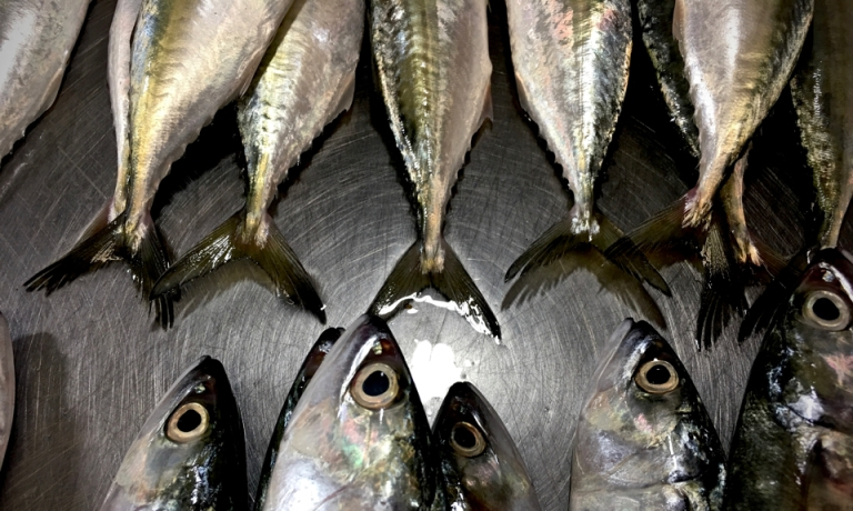 Fish in the market co-operative of Estancia, Philippines.